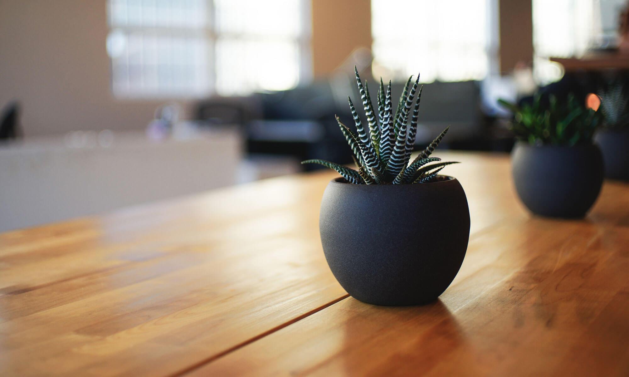 pine brook design